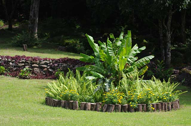 Example of a little garden with cut tree trunks used as border and filled with tropical plants